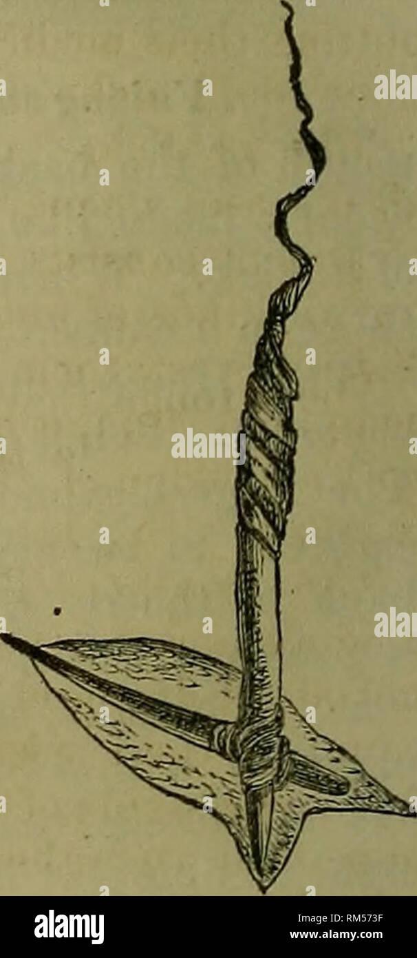 Spear A Salmon Stock Photos & Spear A Salmon Stock Images - Alamy