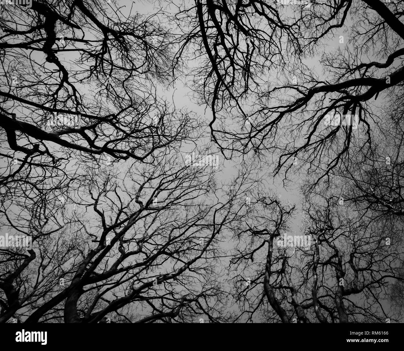 Nerve Fibres Black And White Stock Photos  U0026 Images