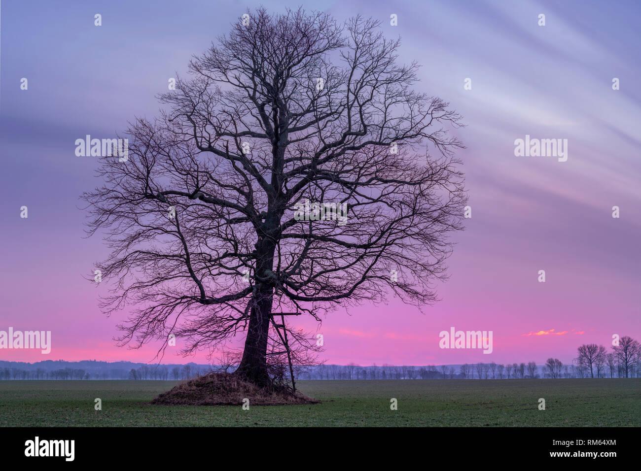 Morgenrot vor Sonnenaufgang im Winter Stock Photo