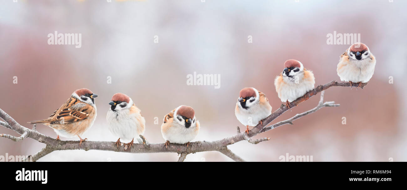 beautiful little birds are sitting next to each other on a branch in a Sunny spring Park and chirping merrily - Stock Image