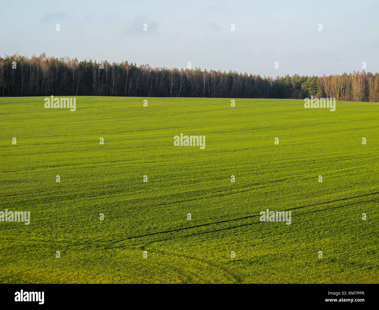Wonderful green field and forest in the countryside on a sunny day - Stock Image