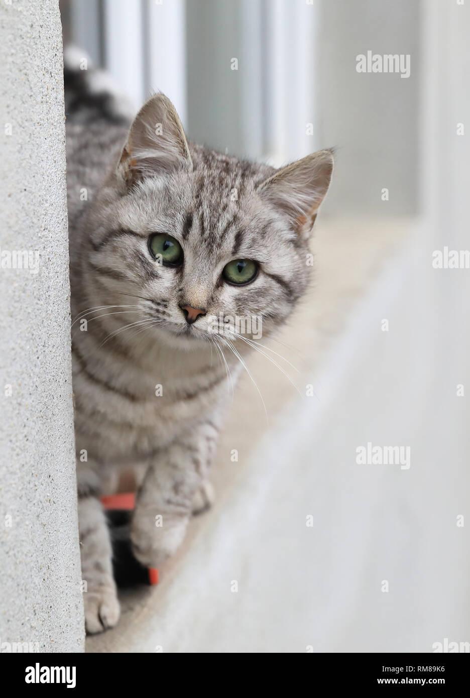 Cute kitten on the window ledge in the winter - Stock Image