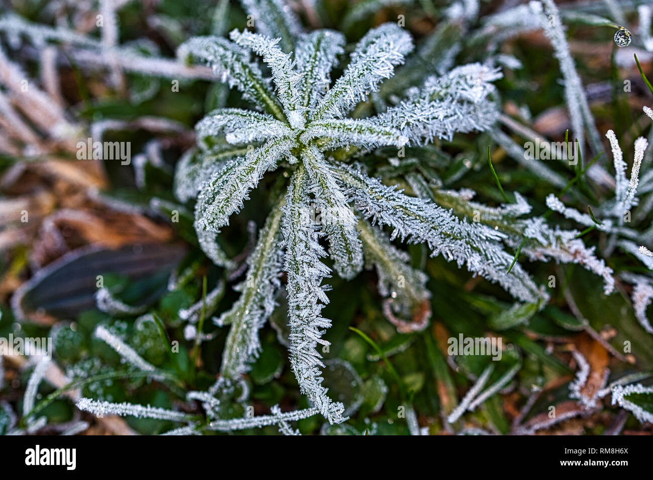 The Frozen Nature Frozen Plants Icy Morning Stock Photo