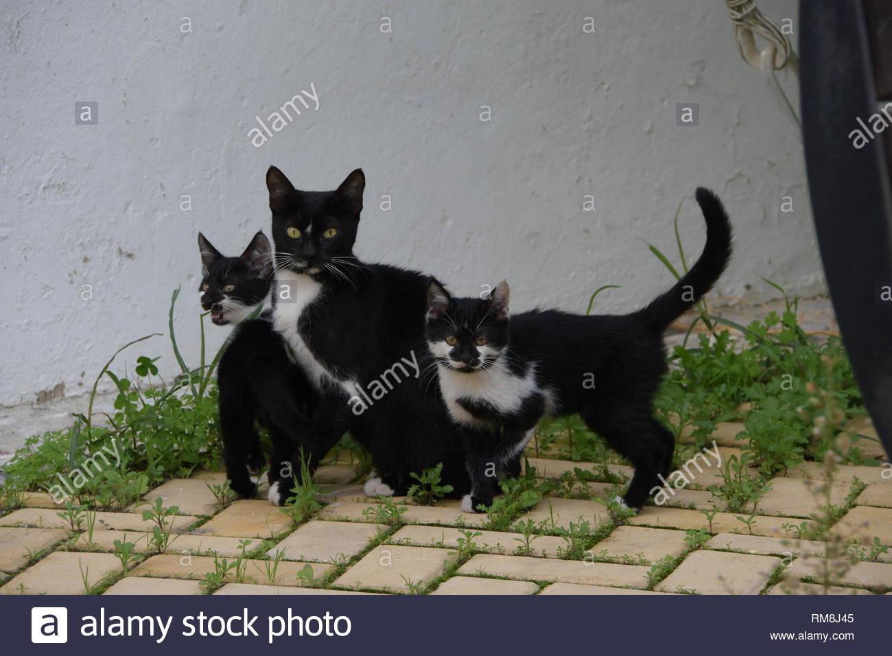 Kittens in Kyrenia family, North Cyprus - Stock Image