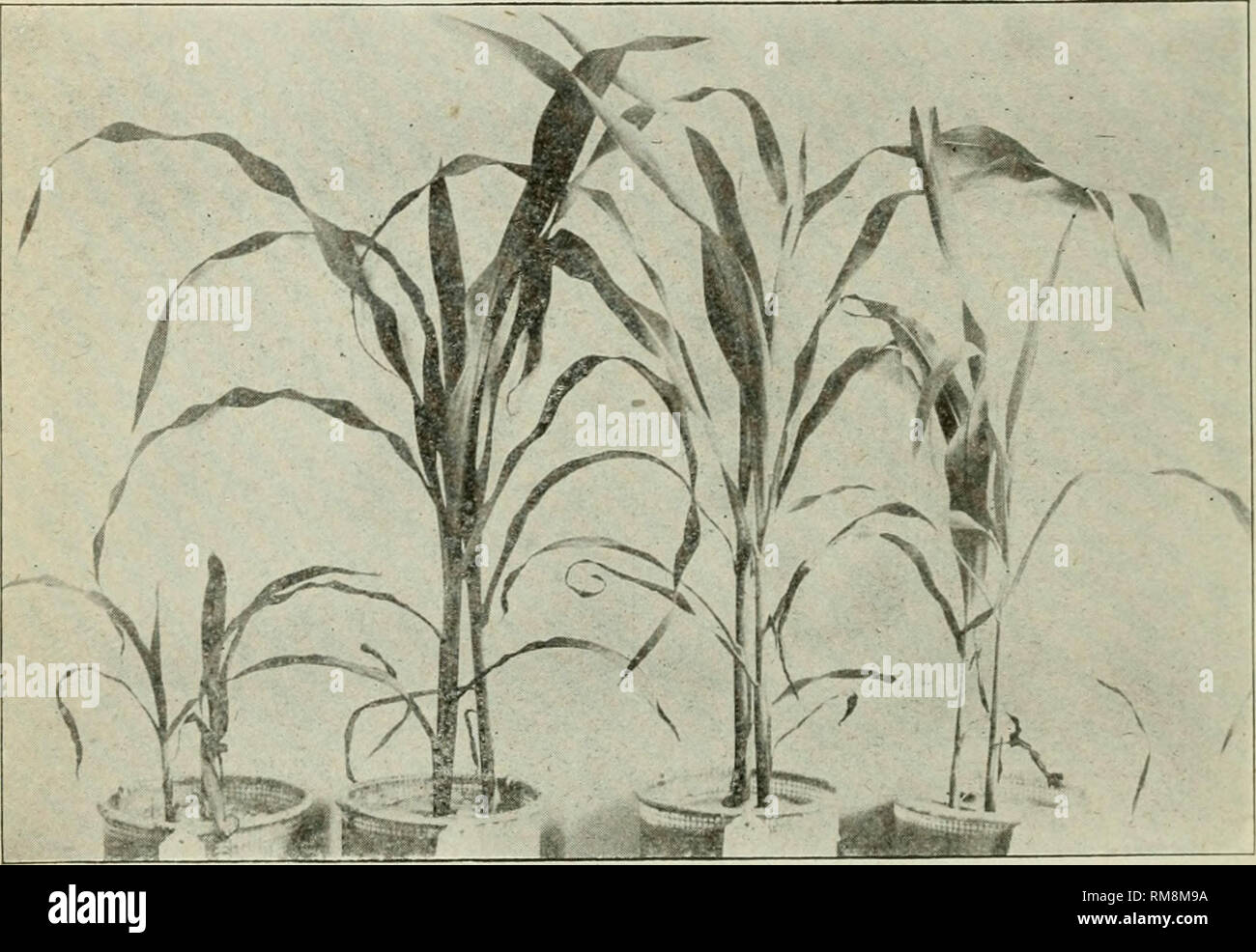 Hoekbureau 240 X 240.Annual Report Of The Agricultural Experiment Station Cornell