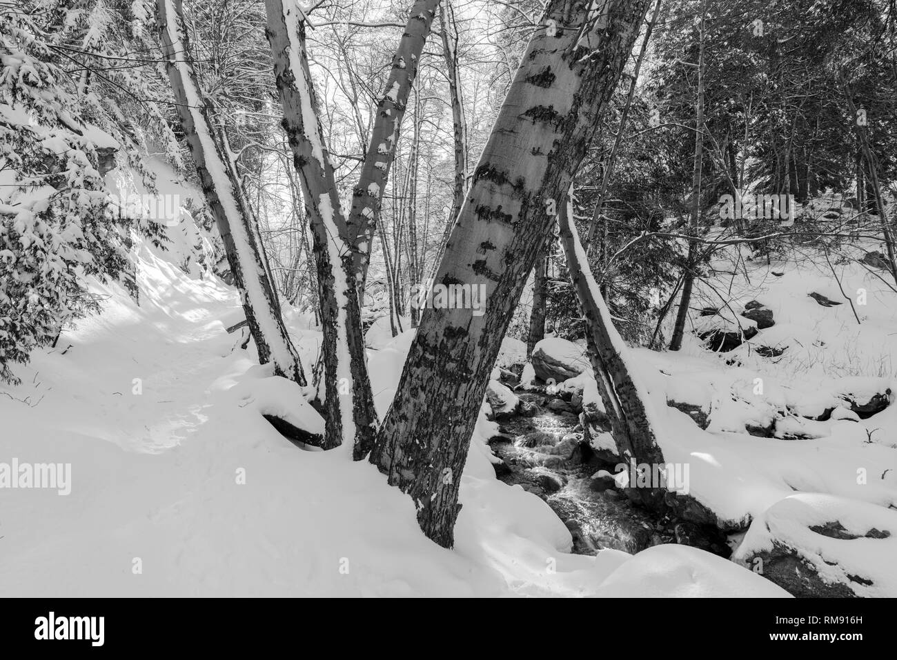 Black and white snowy winter view of Ice House Canyon trail and creek in the San Gabriel Mountains near Mt. Baldy and Los Angeles in Southern Californ - Stock Image