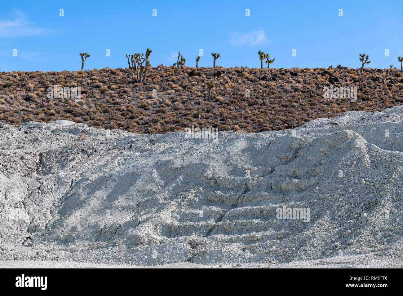 Joshua trees growing near a talc mine in the California desert, USA - Stock Image