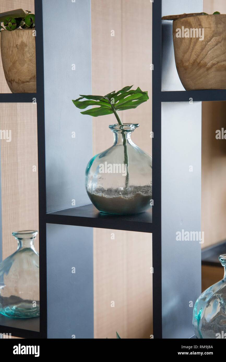 Plants in glass vases indoor decoration. - Stock Image