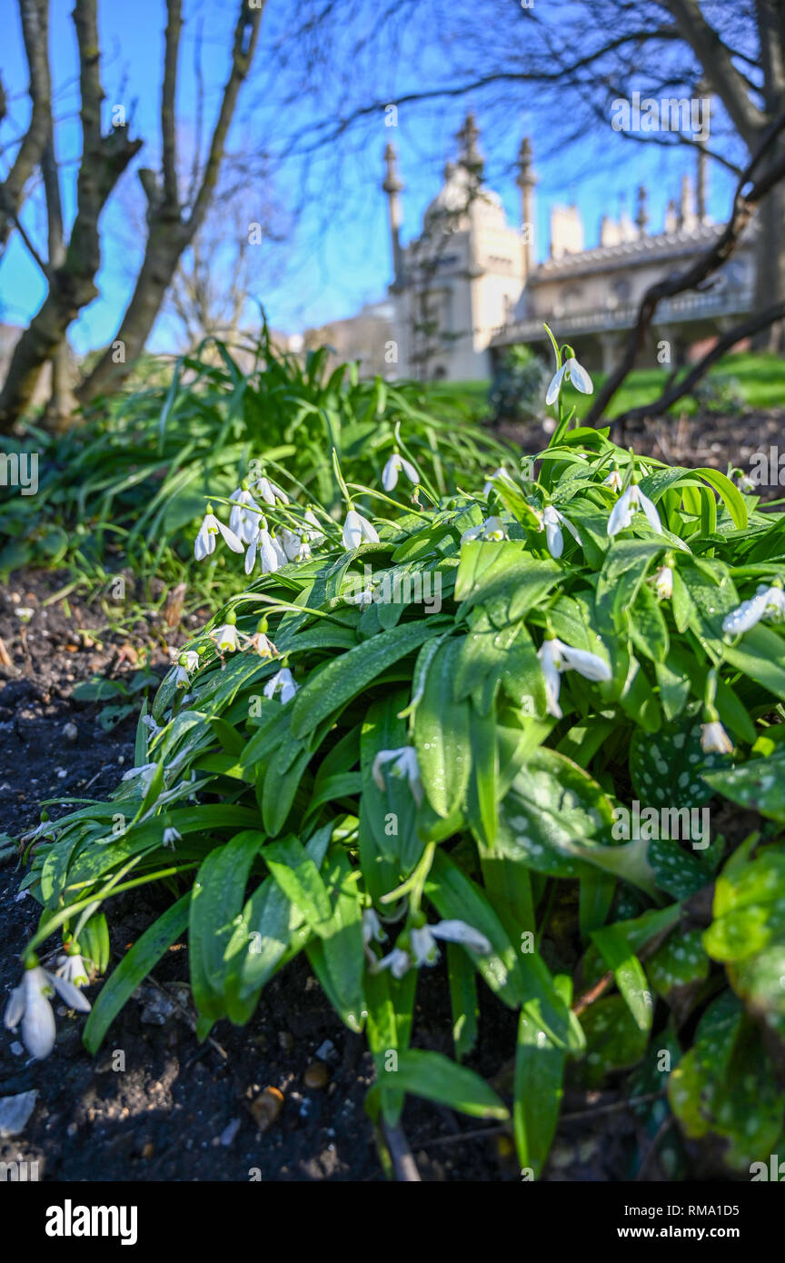 Brighton UK 14th February 2019 - Snowdrops in bloom by the Royal Pavilion in Brighton mild warm weather is forecast to spread across Britain with temperatures expected to reach the mid teens centigrade in some areas Credit: Simon Dack/Alamy Live News Stock Photo