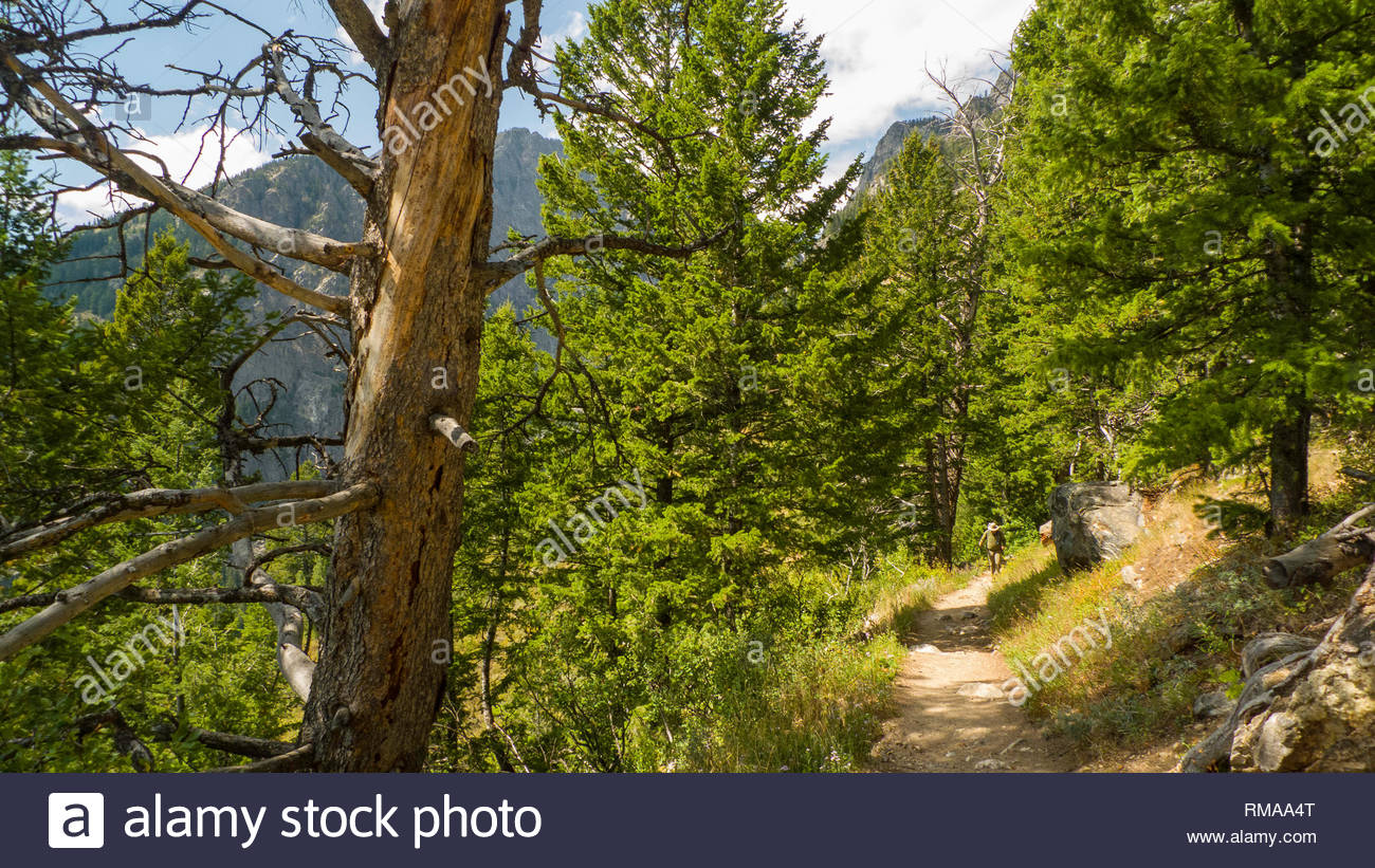Backpacker on trial above Phelps Lake, Grand Teton National Park, Teton County, Wyoming, USA Stock Photo