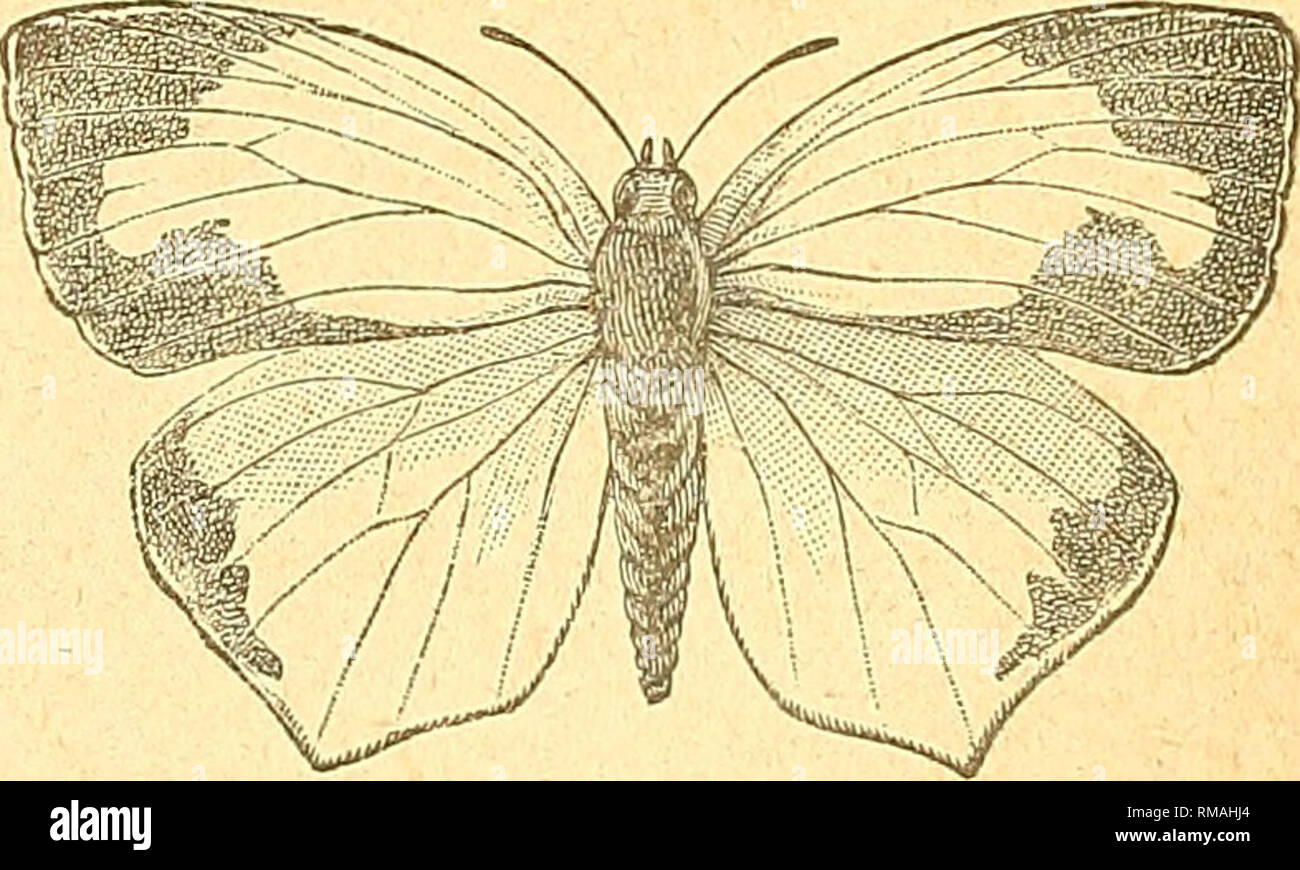 buy popular fd8e7 54e17 Entomological Society of Ontario  Insect pests  Insects. Fig.