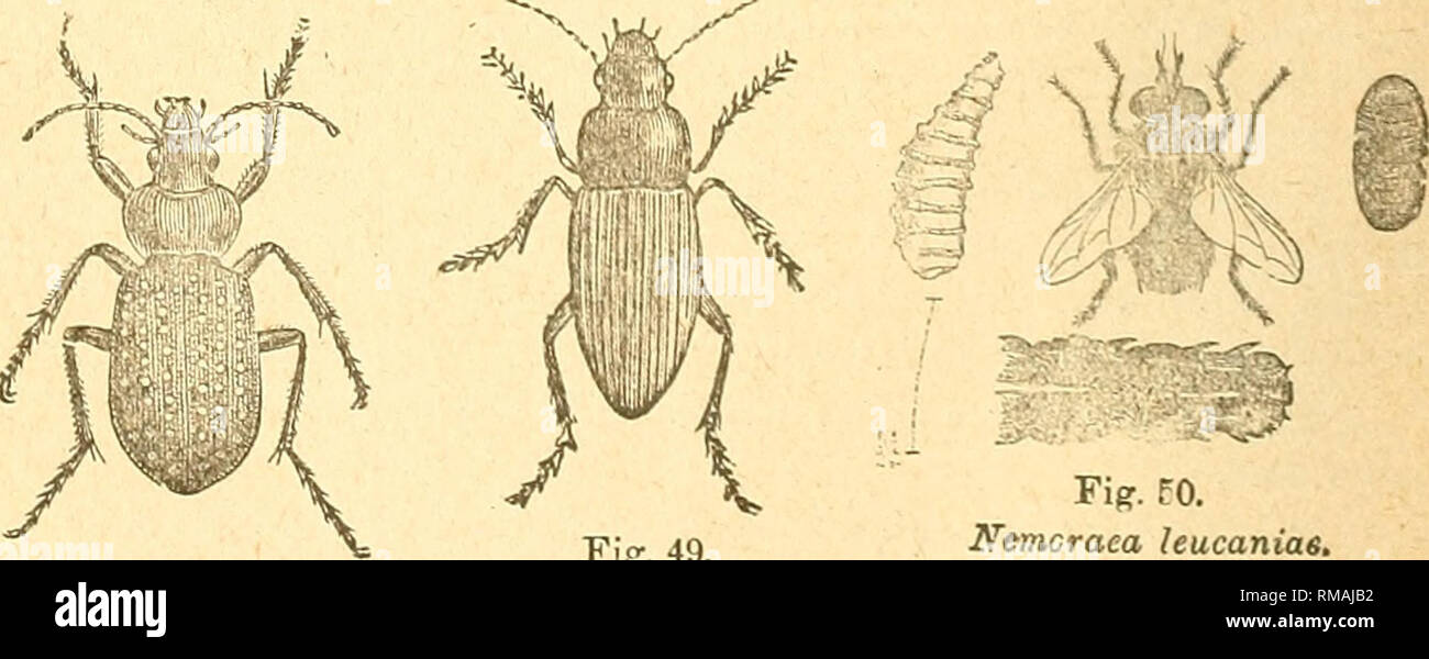 04dcd026b8 Annual report. Entomological Society of Ontario  Insect pests  Insects. Fig.