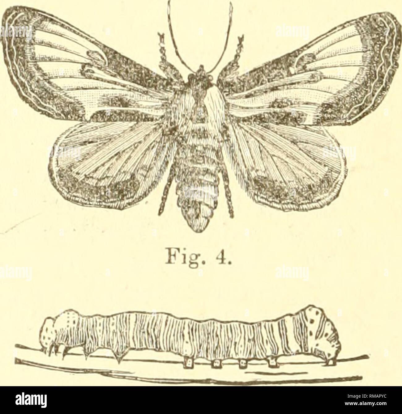 Annual report  Entomological Society of Ontario