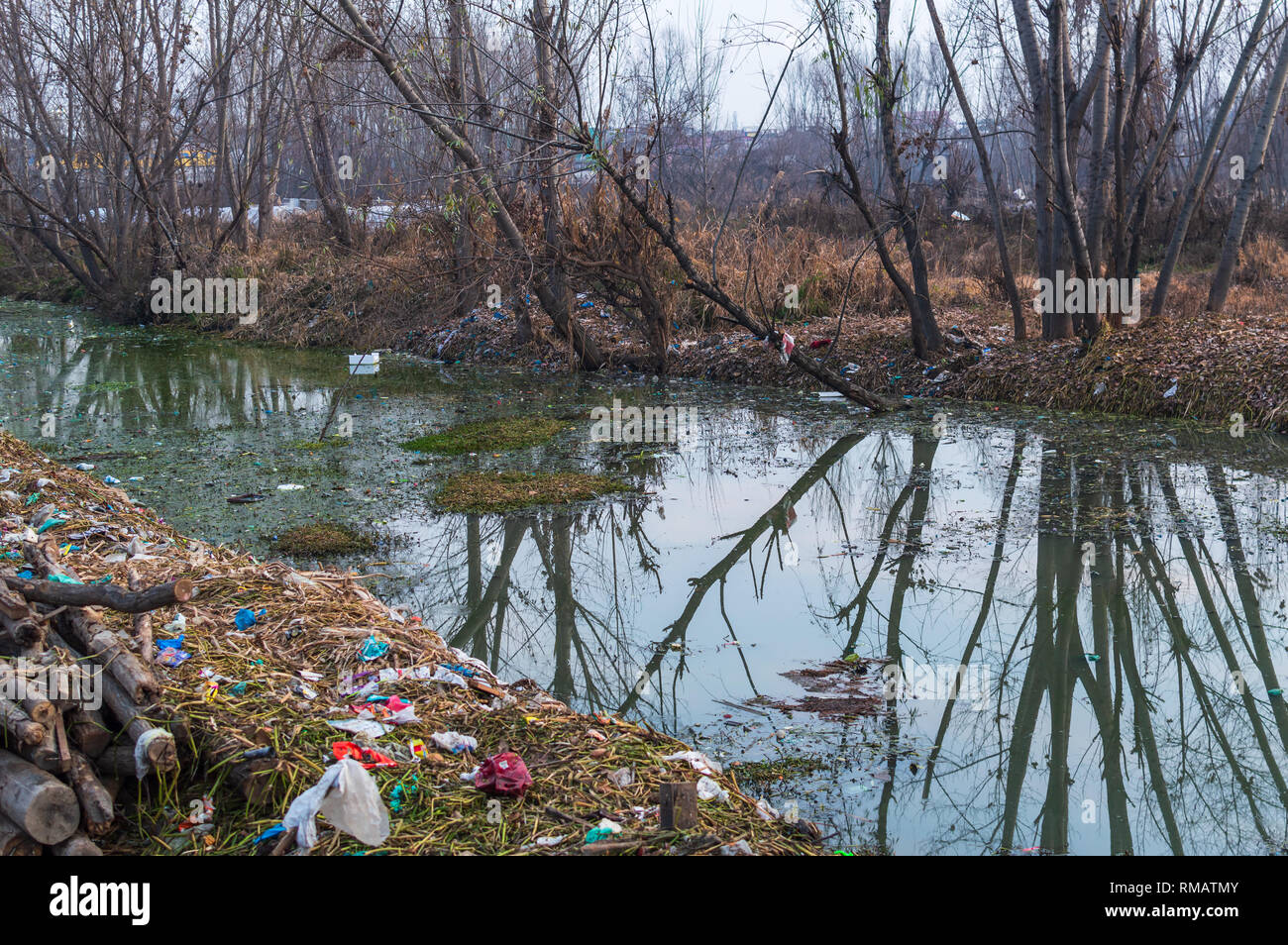 Reflection of trees in a polluted water body, Plastic wastes and human wastes depositedin a small river in Kashmir, India - Stock Image