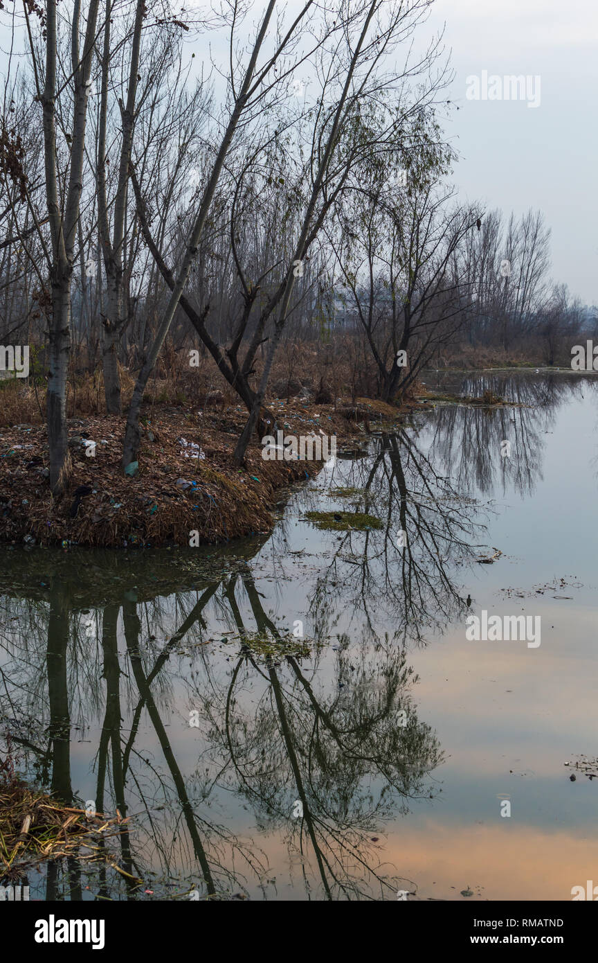 Reflection of trees in a polluted water body. Slight tinges of orange colour due to Sunset reflected on lake surface. Plastic pollution on river banks - Stock Image
