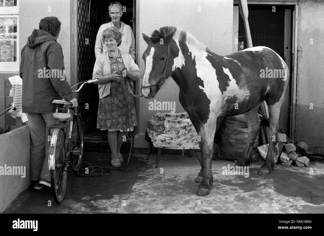 1970s Irish family with pet urban horse in front yard of their home.  Limerick, in County Limerick, Eire. West Coast of Southern Ireland 70s HOMER SYKES - Stock Image
