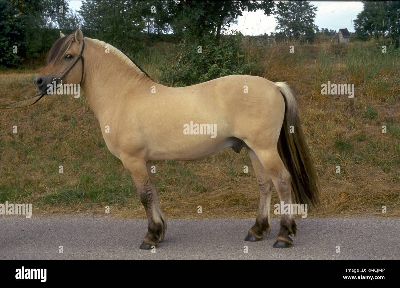 The Icelandic Horse Also Norwegian Is The Smallest Of Today S Horse Breeds The Icelandic Horse Was The Horse Of The Vikings They Were Carried In The Warriors Longships When They Raided The