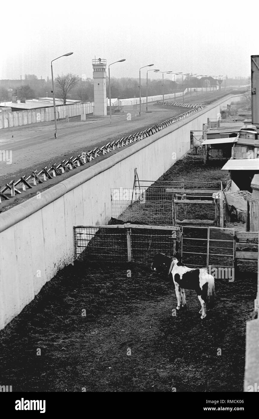 The stables of a riding and pony club abut directly on the Berlin Wall in the district of Neukoelln. - Stock Image