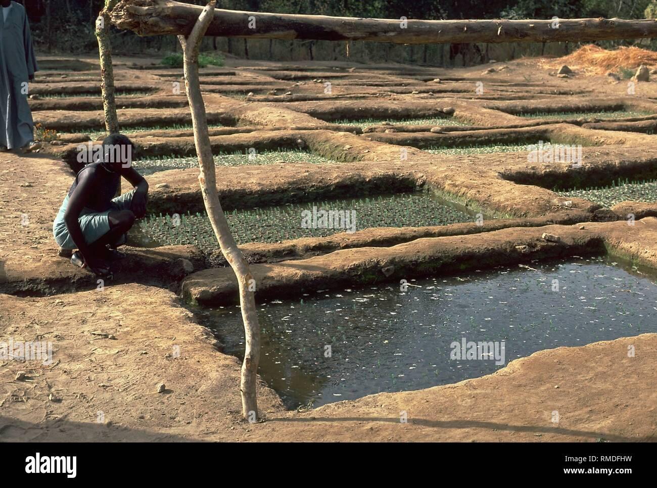 Water Beds In A Nursery In Sudan Stock Photo Alamy