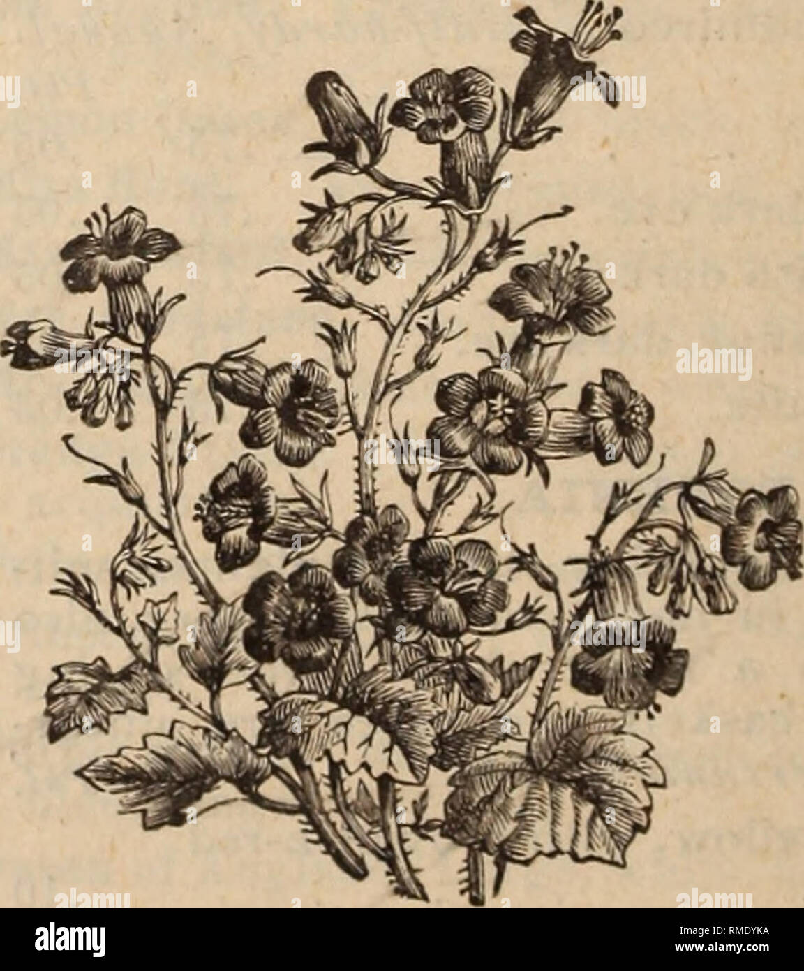 Annual Catalogue Of Seeds Plants C Nurseries Horticulture