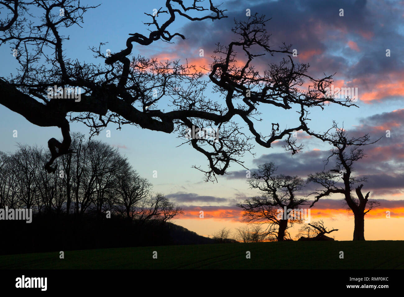 Winter, Trees, Sunset, Gatcombe, Godshill, Isle of Wight, England, UK, Stock Photo