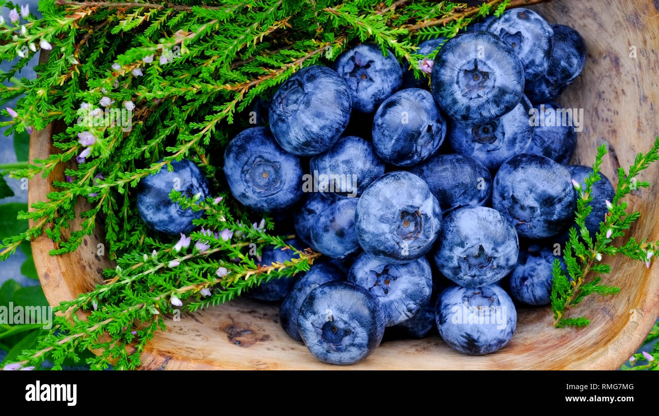 Blueberry antioxidants containing super food from Lapland. Antioxidant berries in a traditional Curly Birch wood bowl - Stock Image