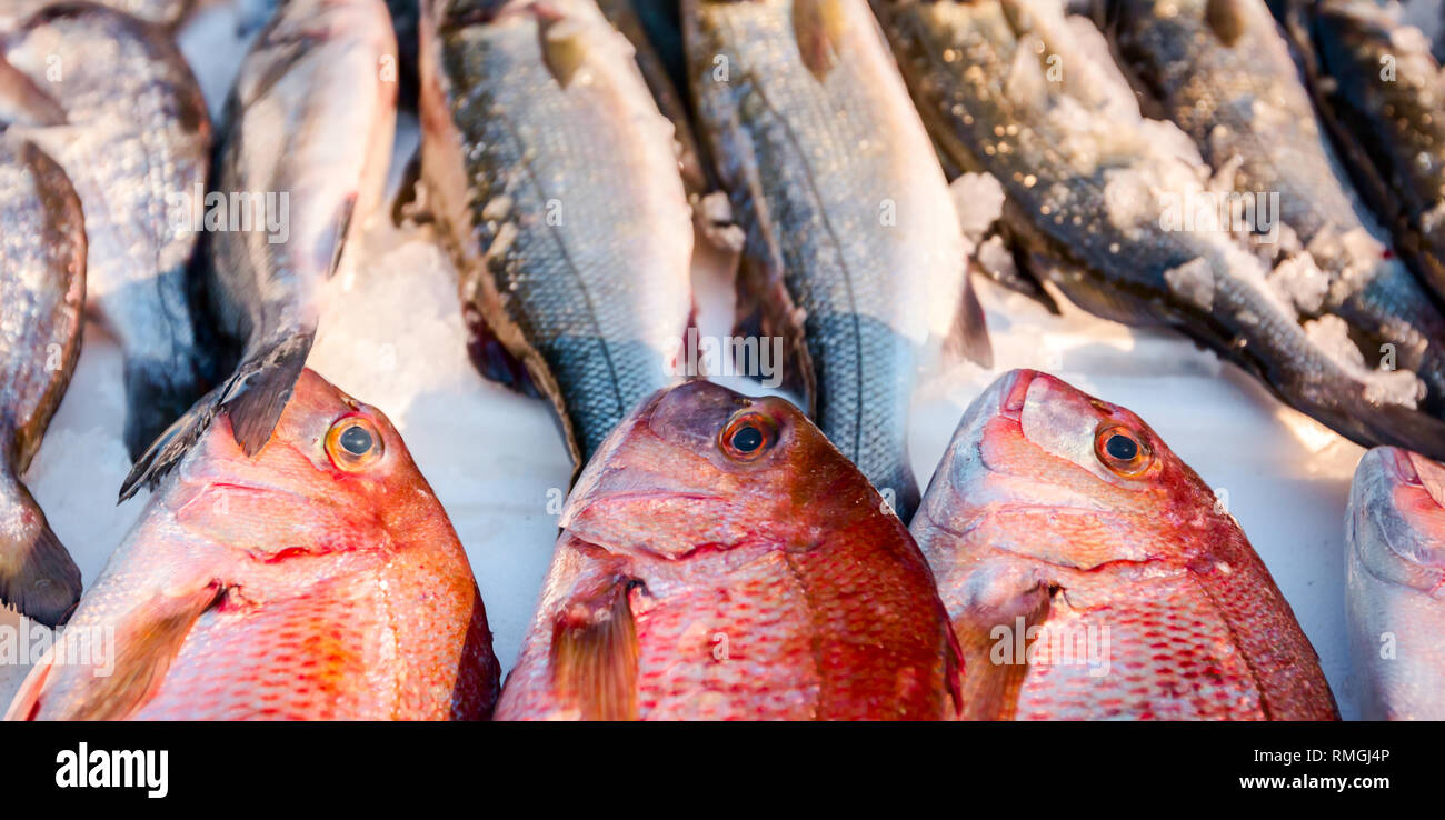 Pile of fresh Northern Red Snapper fish, Lutjanus campechanusfish, for sale on the fishmonger, outdoor seafood market. Stock Photo