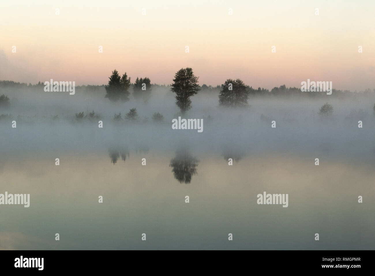 Trees stand in the morning fog on the riverbank - Stock Image