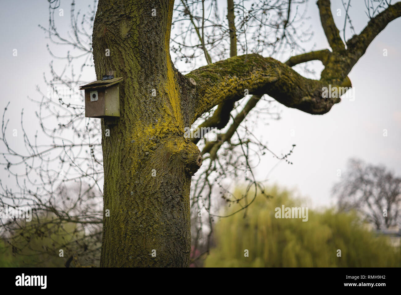 A bird house on a tree in a park in central London (UK). Landscape format. - Stock Image