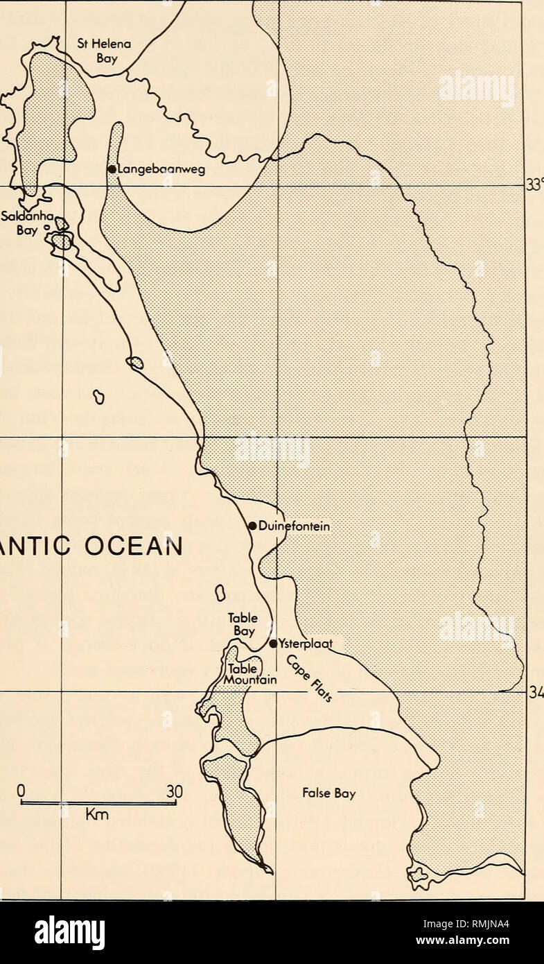 . Annals of the South African Museum = Annale van die Suid-Afrikaanse Museum. Natural history. EARLY PLIOCENE MARINE AVIFAUNA 18°30 149. ATLANTI 18°30 Fig. 1. Tertiary sea-bird localities in the south-western Cape Province showing their relationship to possible shoreline configuration (shaded portion) in the early Pliocene (modified from Olson 1983).. Please note that these images are extracted from scanned page images that may have been digitally enhanced for readability - coloration and appearance of these illustrations may not perfectly resemble the original work.. South African Museum. Cap - Stock Image