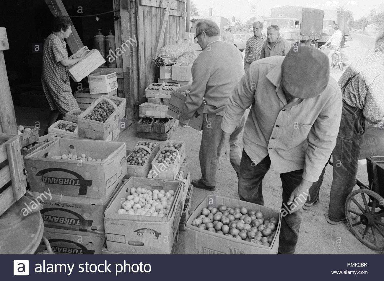 Fruit sales in an old barn in Old - Marzahn in Berlin, the