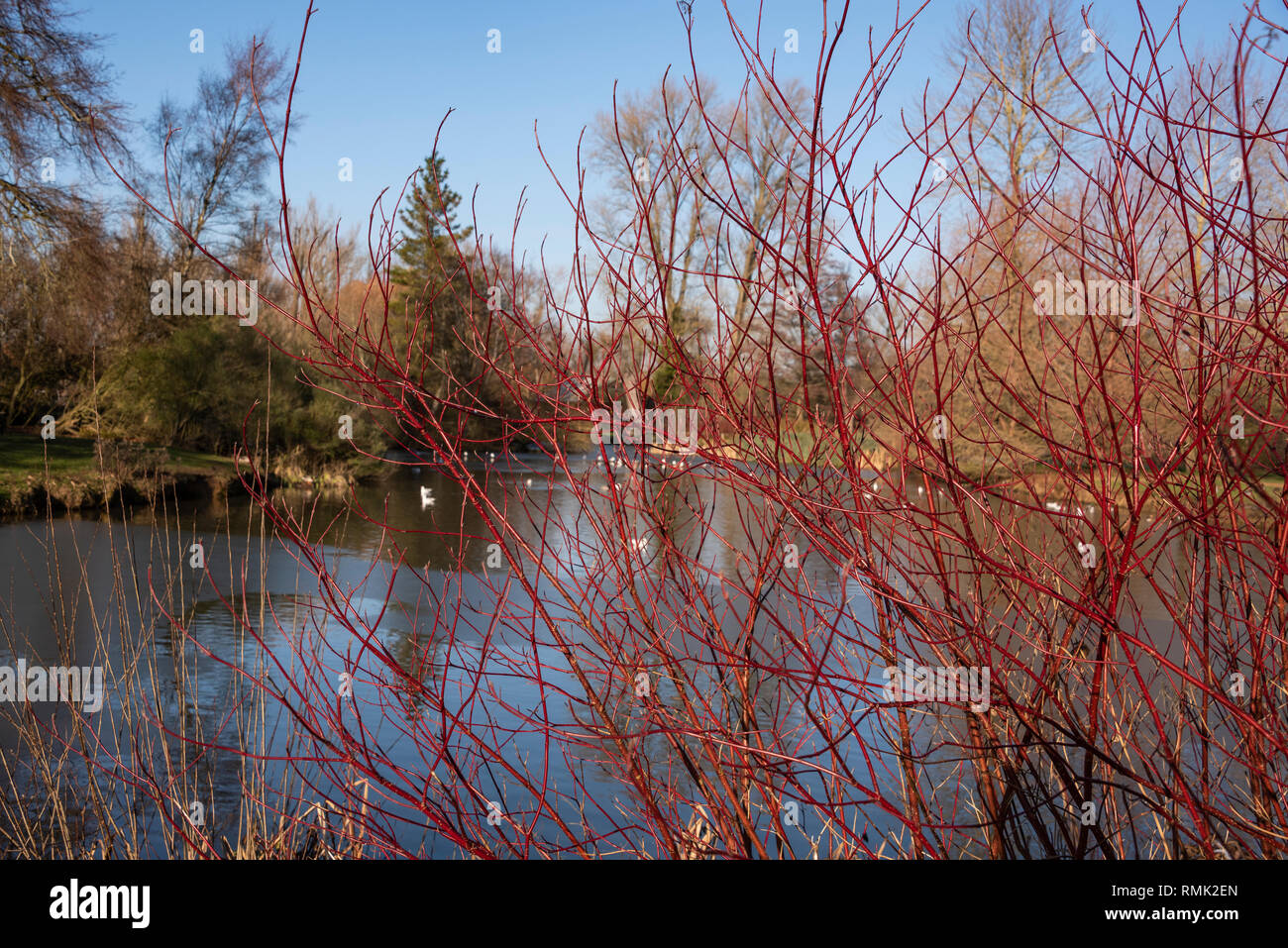 Cox's Pond, Oxford University Parks in Winter - Stock Image