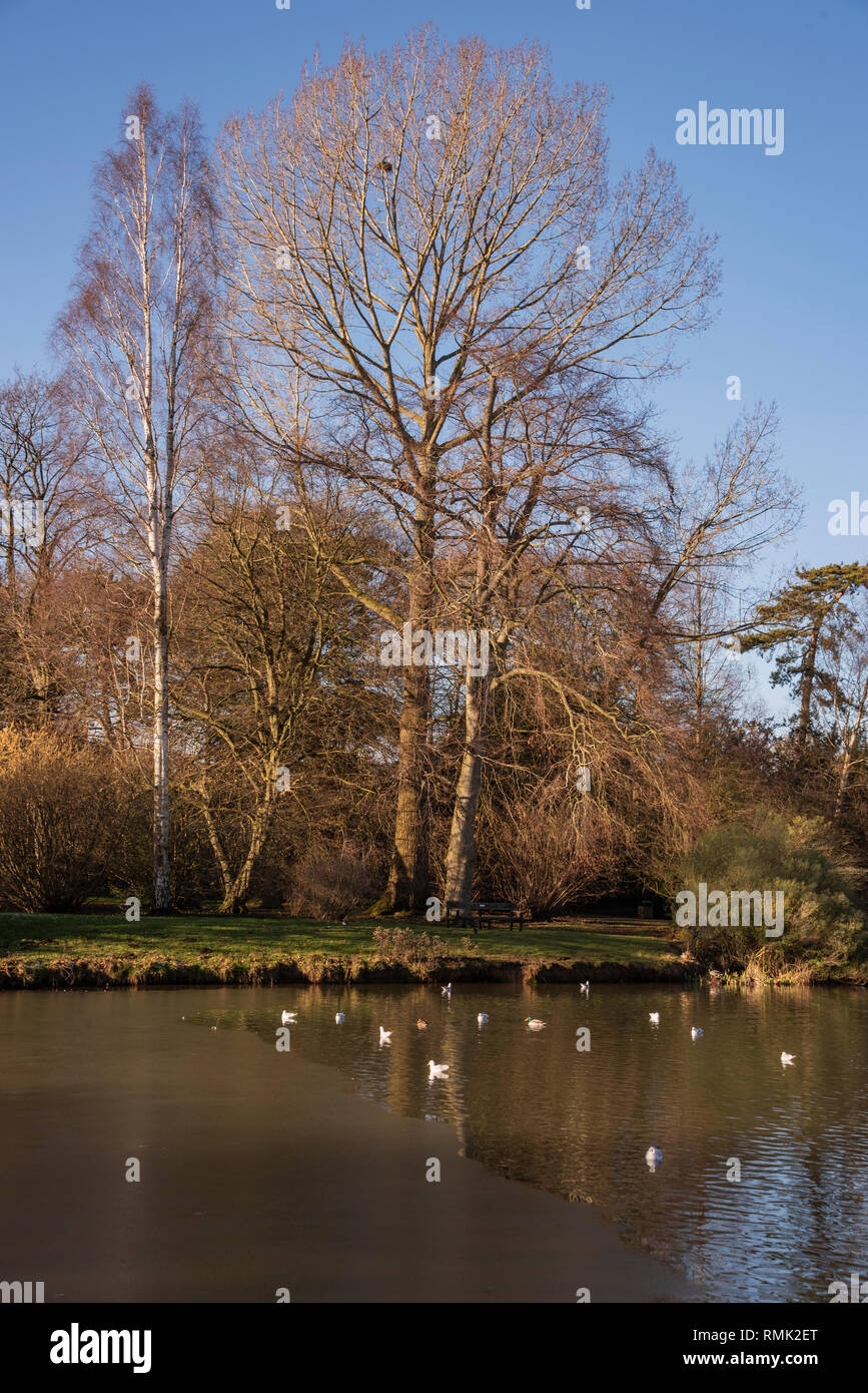 Ice on Cox's Pond, Oxford University Parks in Winter - Stock Image