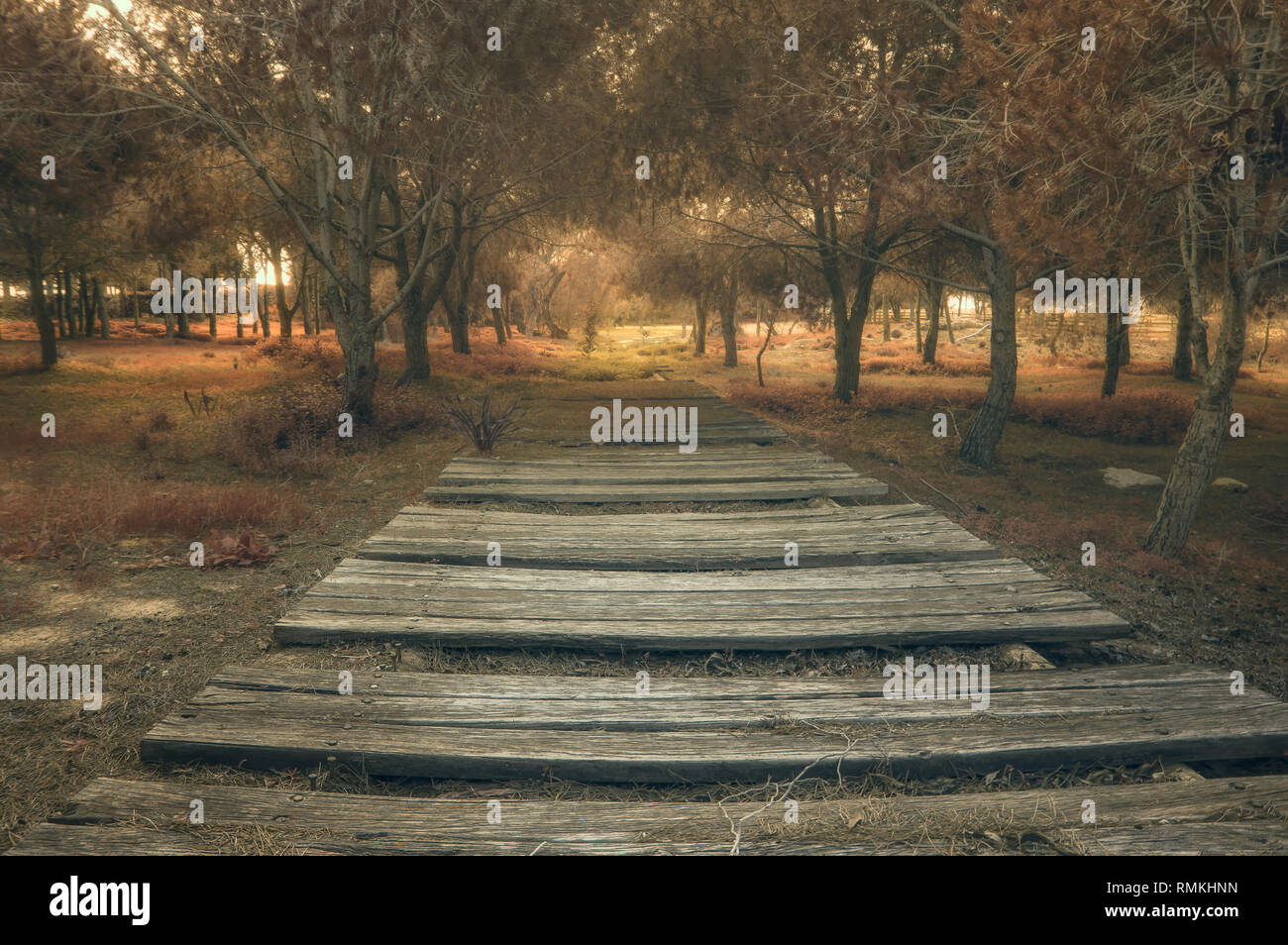 Forrest path - Stock Image