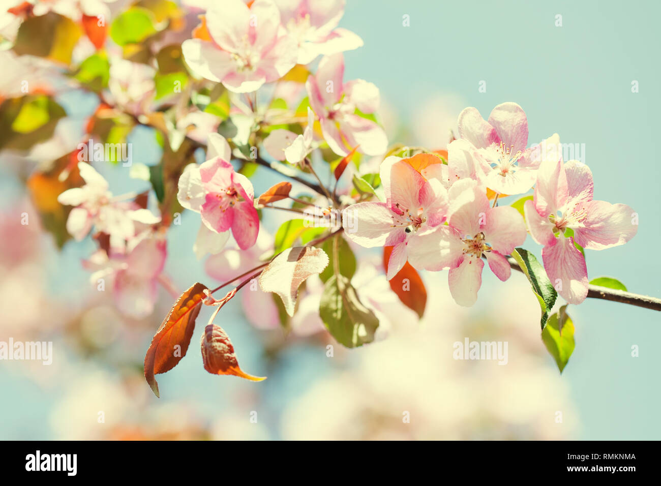 Spring Season Warm Sunny Floral Wallpaper Fruit Tree Branch With