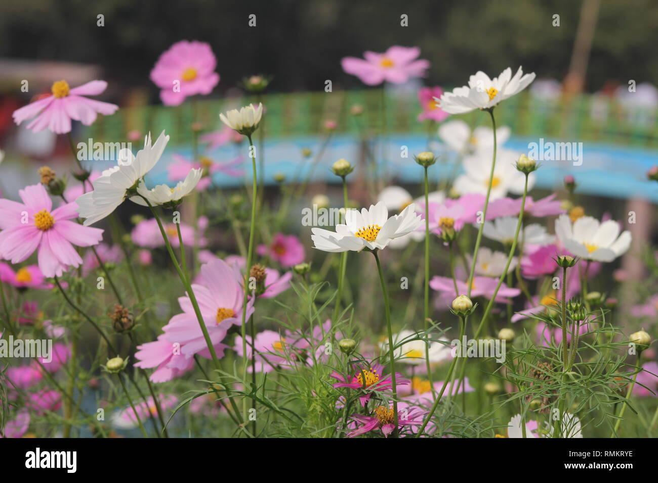 Bast phot background - Stock Image