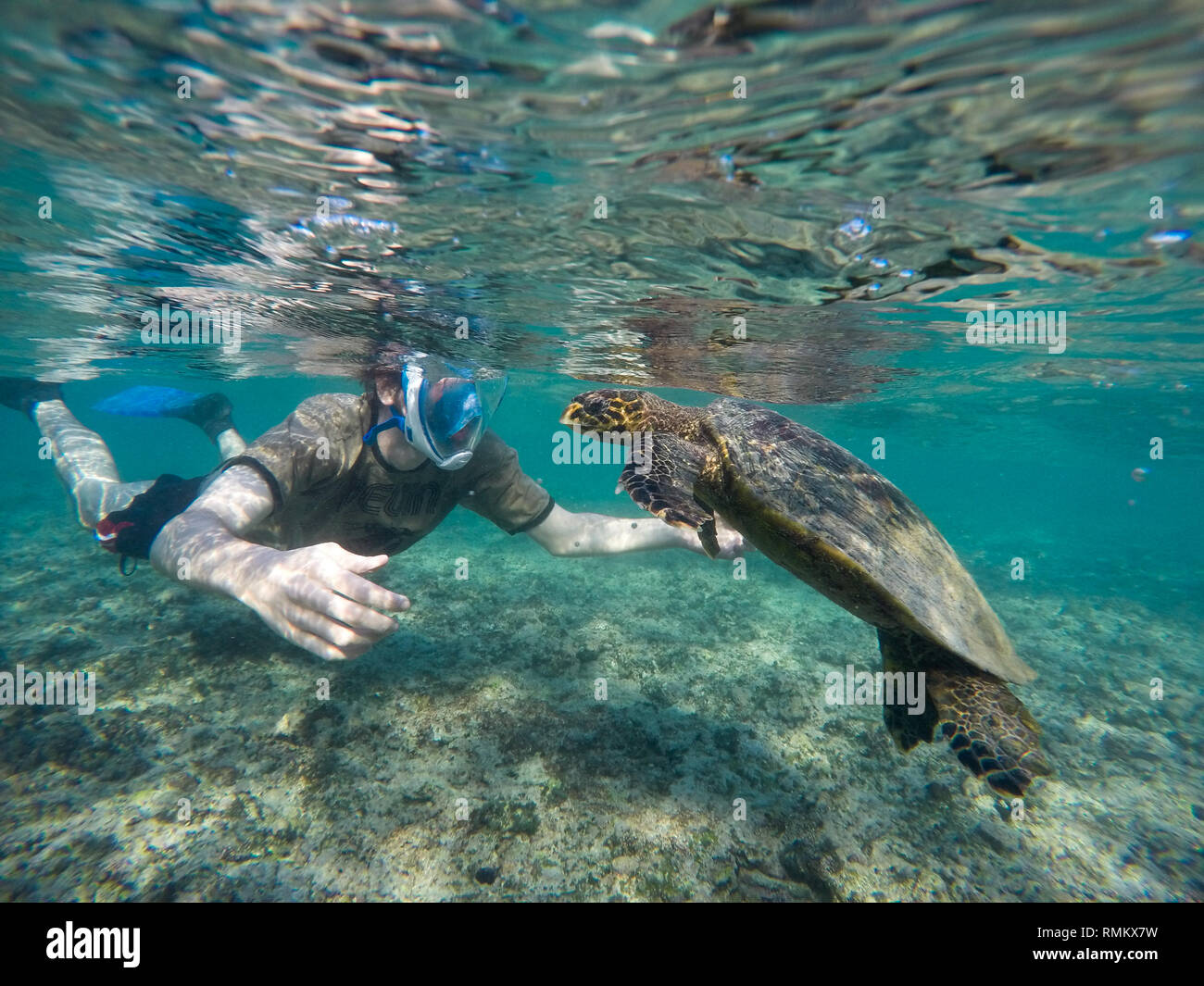 young man snorkeling and swimming with a Hawksbill sea turtle (Eretmochelys imbricata). This is the smallest of the marine turtles, rarely more than a Stock Photo