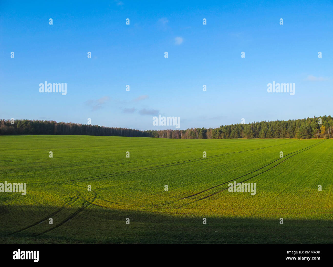 Wonderful green field and forest in the countryside on a sunny day with blue sky - Stock Image