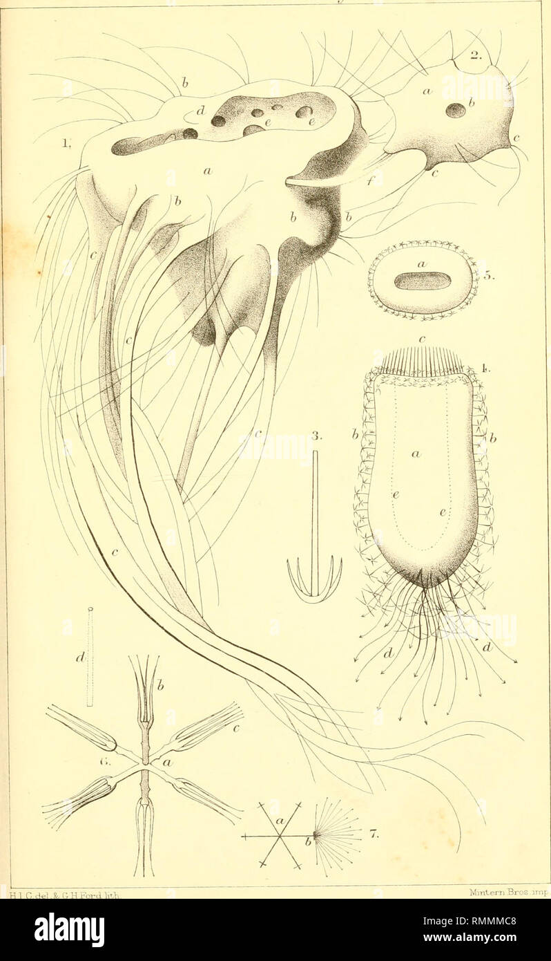 . The Annals and magazine of natural history; zoology, botany, and geology. Natural history; Zoology; Botany; Geology. hm.SzMaq.Not.BiHh. -V./. Vo/.J5.PLX.. HI C-delXGHFordKth Mmterji Bros amp.. Please note that these images are extracted from scanned page images that may have been digitally enhanced for readability - coloration and appearance of these illustrations may not perfectly resemble the original work.. London, Taylor and Francis, Ltd Stock Photo