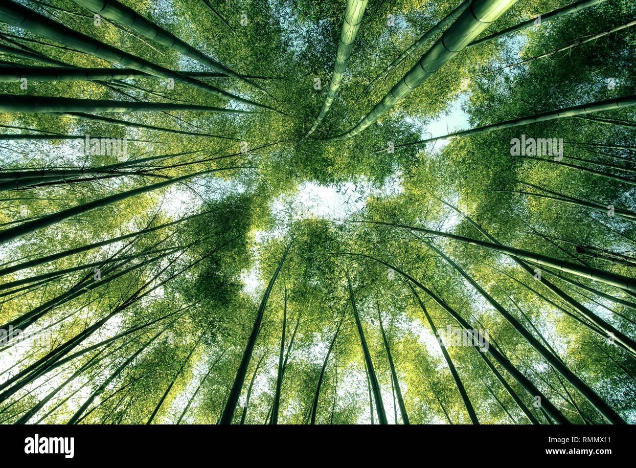 Arashiyama Bamboo Forest in Kyoto Japan Stock Photo