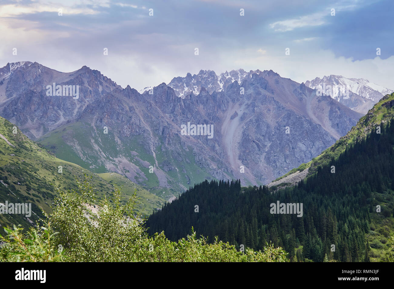 bright greens on the background of mountain peaks with snow-capped peaks, the slopes are covered with tall spruces - Stock Image