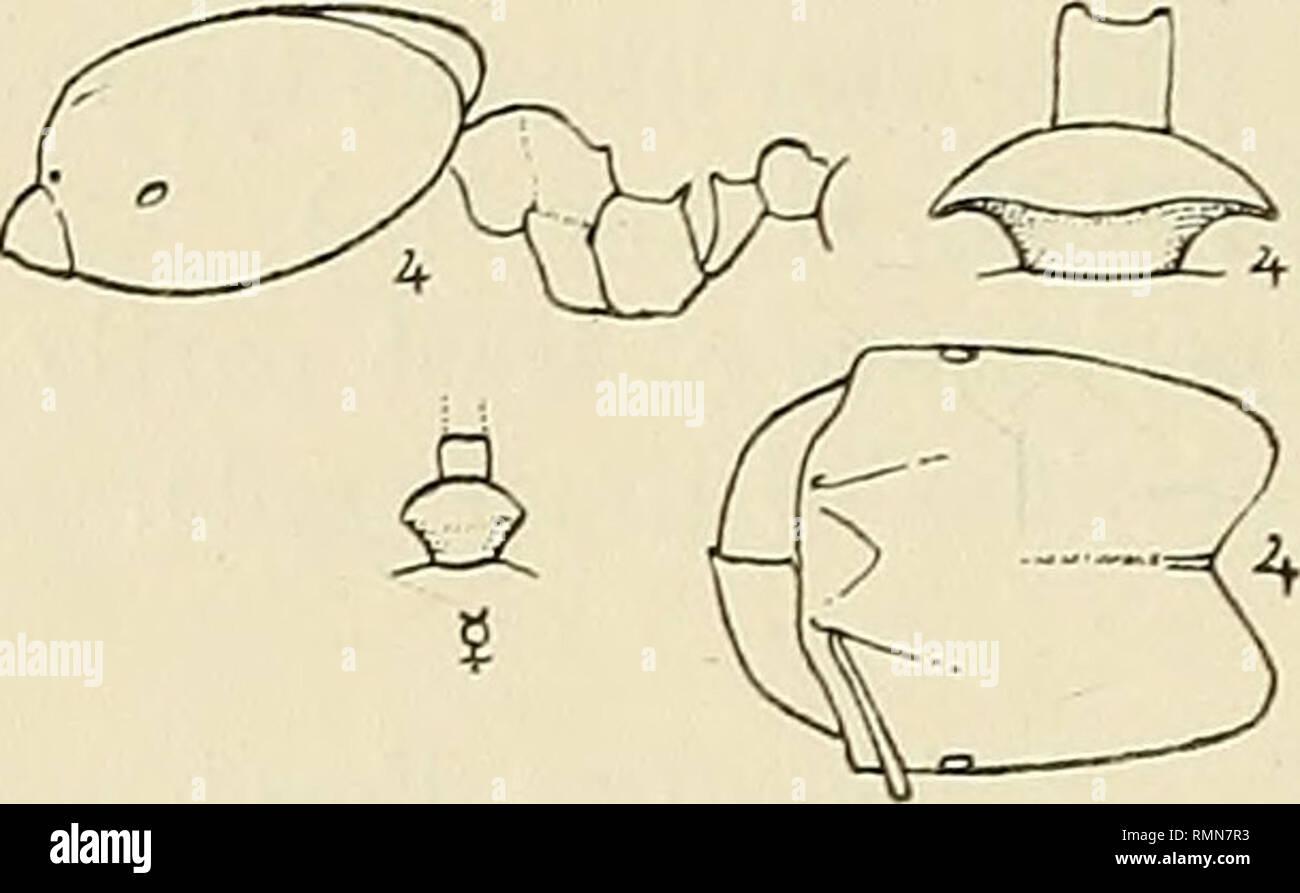 annals of the south african museum \u003d annale van die suid afrikaanse Midbrain Diagram