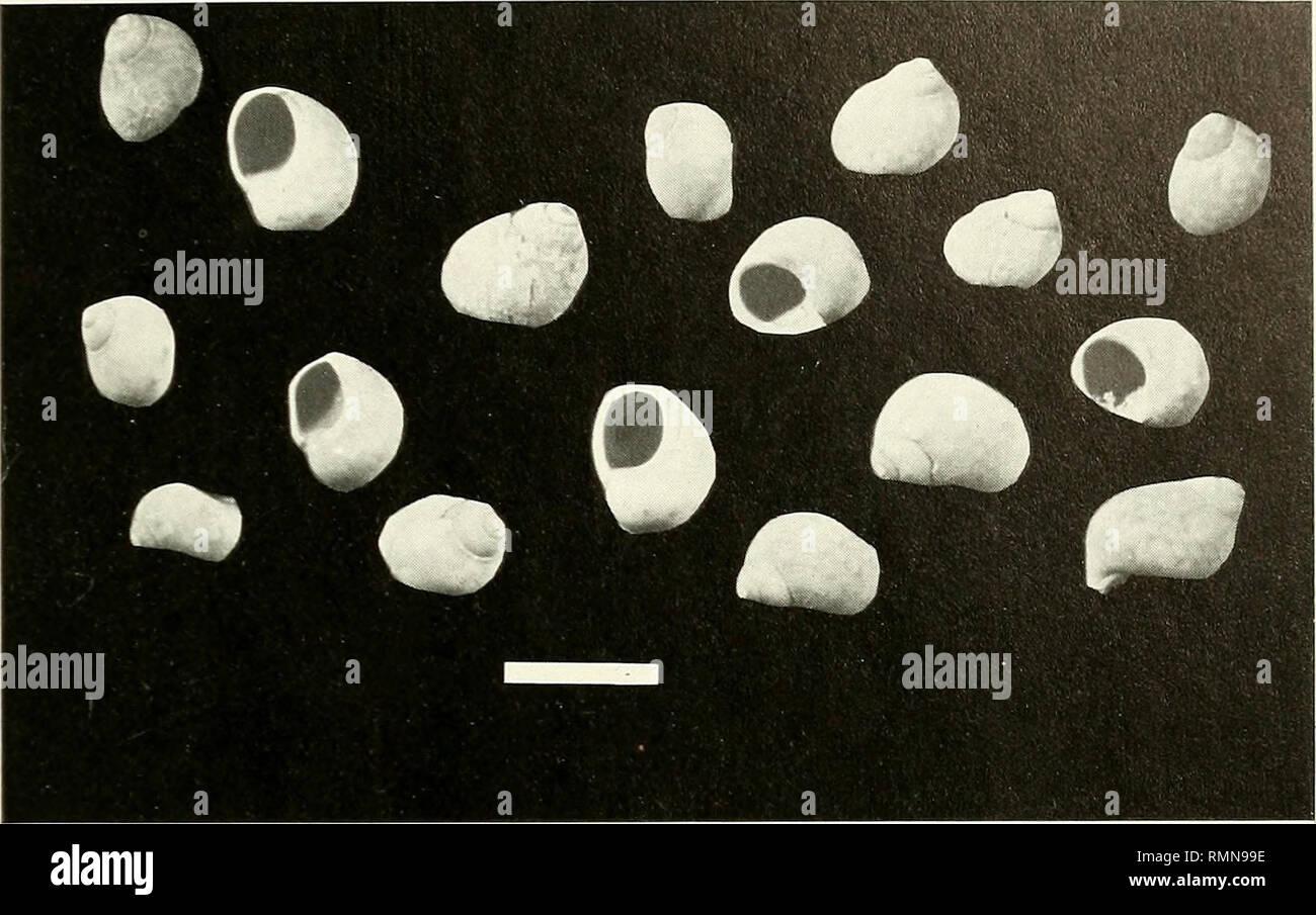 dating med hjälp av fossila assemblage bf4 matchmaking problem