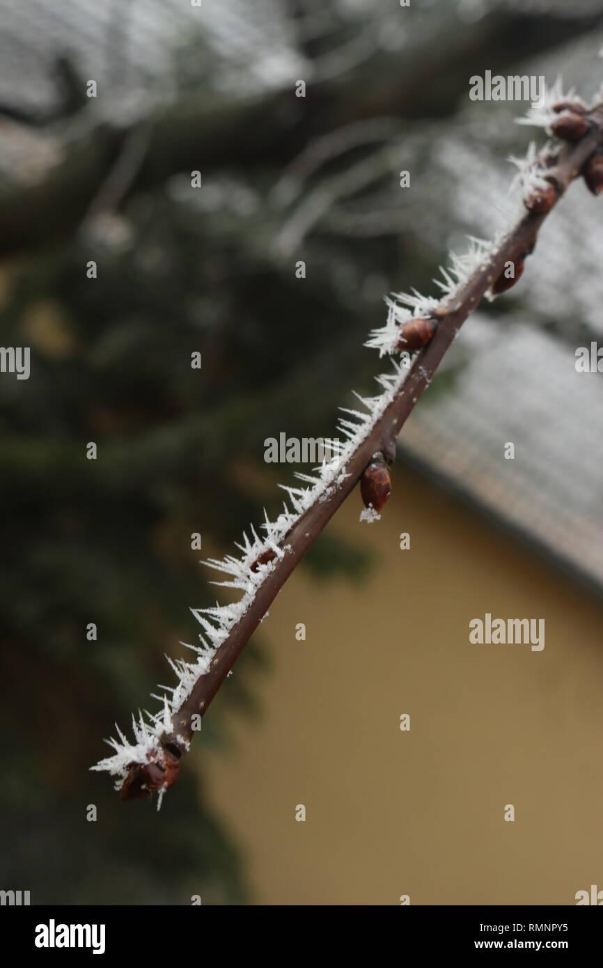 Kirschbaumzweig bei Frost - Stock Image