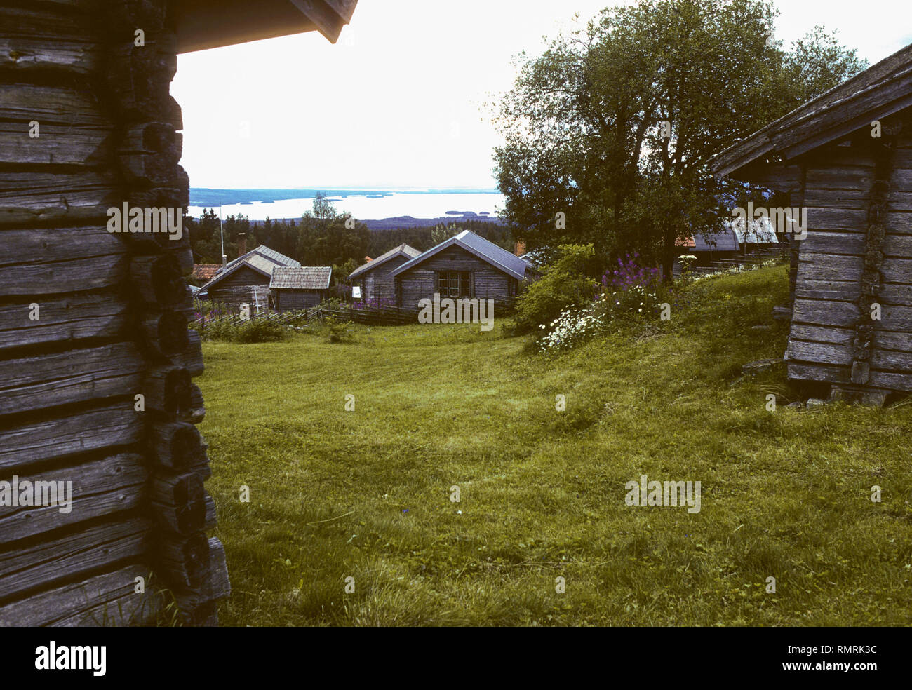 FRYKÅSEN chalet in Dalarna Sweden a summer posture of animals - Stock Image