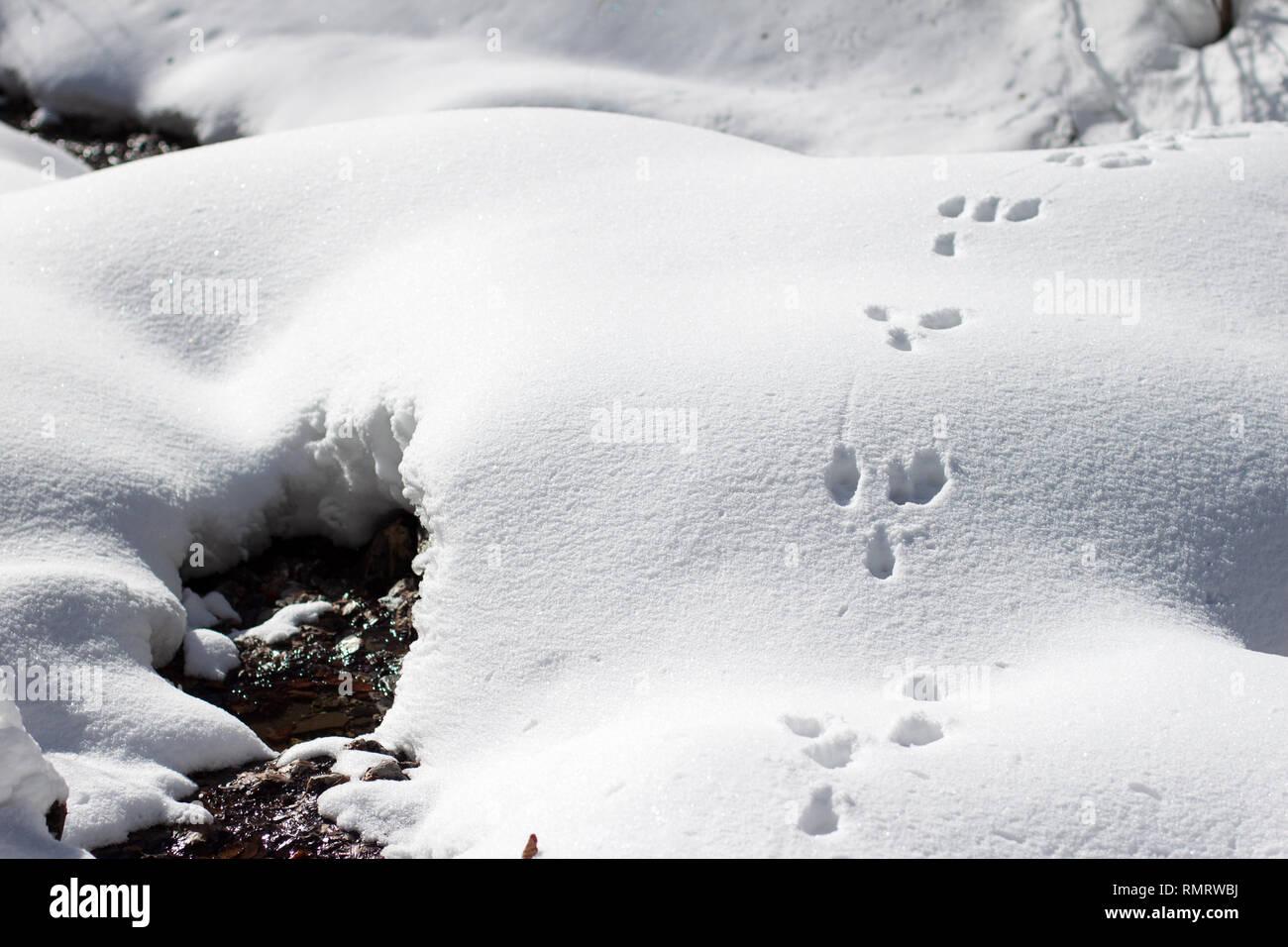 Rabbit Foot Images, Stock Photos & Vectors | Shutterstock