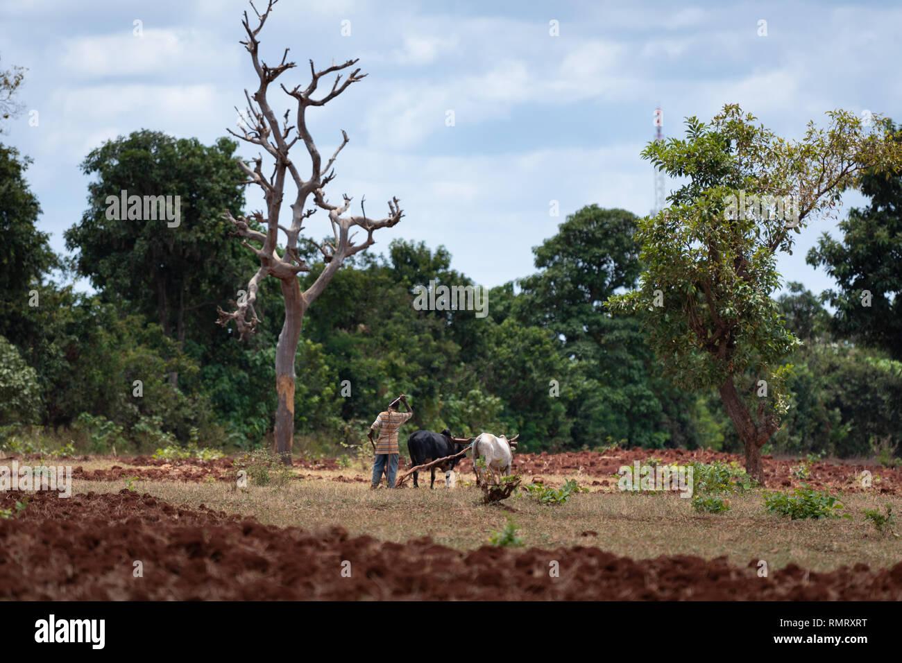 Subsistence agriculture in Ethiopia, Oromia region. - Stock Image