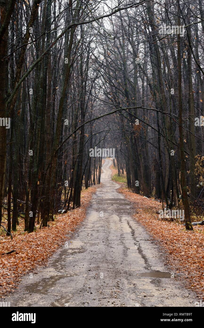 Lonely road through an empty autumn forest at a cloudy day - Stock Image