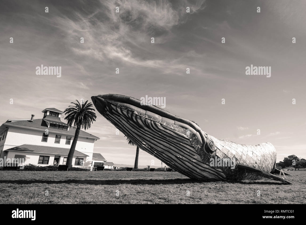 The Monterey Bay Aquarium's Blue Whale art exhibit on Crissy Field. San Francisco. - Stock Image