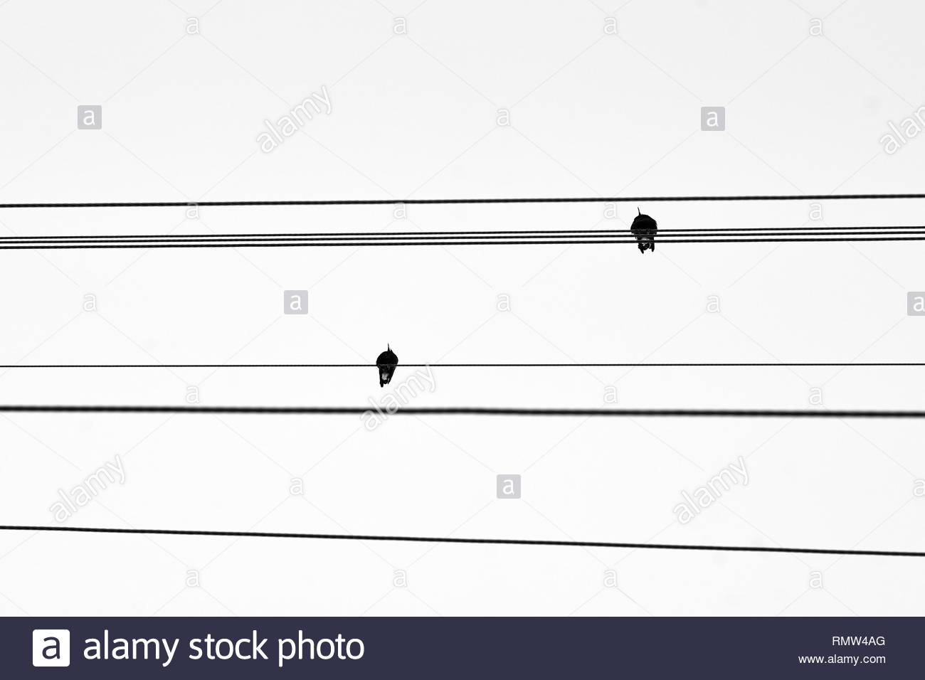 Two magpies perched on powerlines - a black and white, minimalist image evoking contemplation of themes such as man vs nature, and the energy crisis. - Stock Image
